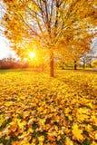 Sunny autumn foliage Stock Image