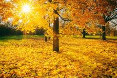 Sunny autumn foliage Royalty Free Stock Image
