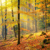 Sunny autumn forest Stock Images