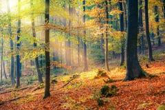 Sunny autumn forest Stock Photos