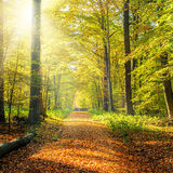 Sunny autumn forest Stock Image