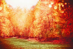 Sunny autumn forest with gold foliage around the glade. Fall park landscape with color fiery foliage , sunbeams and lawn, outdoor stock images