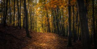 Sunny Autumn Forest Path Royaltyfri Foto