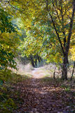 Sunny Autumn Forest. Autumn forest path between maple, oak and poplar trees in a sunny day Stock Photography