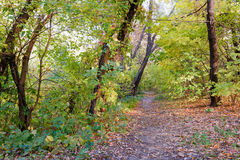 Sunny Autumn Forest. Autumn forest path between maple and poplar trees in a sunny day Stock Photo