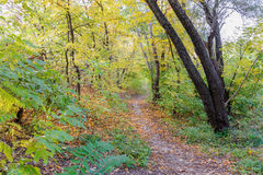 Sunny Autumn Forest. Autumn forest path between maple and poplar trees in a sunny day Stock Photography