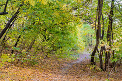 Sunny Autumn Forest. Autumn forest path between maple and poplar trees in a sunny day Stock Photos