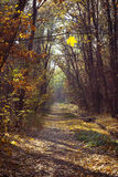 Sunny autumn forest; selective focus. The path in the autumn sunny forest Royalty Free Stock Photos