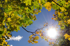 Sunny autumn frame Royalty Free Stock Photos