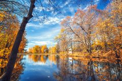 Sunny autumn in the park over lake Royalty Free Stock Photo