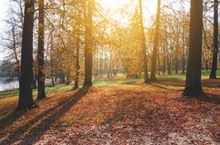 Sunny autumn landscape with covered by orange and red leaves road in empty park. stock photography