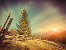 Sunny autumn landscape in the mountains. Royalty Free Stock Photo