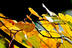 Sunny autumn leaves stock photography