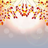Sunny Autumn Leaves Background Vector Illustration naturel illustration de vecteur