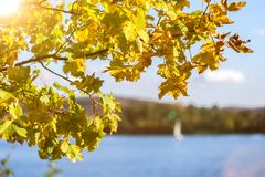 Sunny autumn leaves and lake background Royalty Free Stock Photography