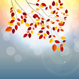 Sunny Autumn Leaves naturel illustration stock