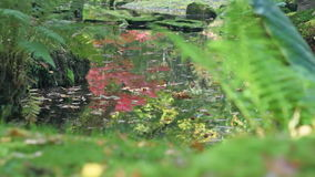 Sunny Autumn Leaves in Pond Japanese Garden stock video footage
