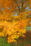Sunny autumn Royalty Free Stock Image