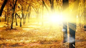 Sunny autumn morning. In peaceful park Royalty Free Stock Photos