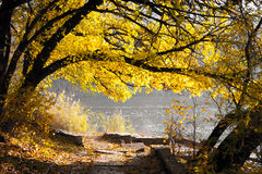 Sunny autumn morning Royalty Free Stock Images