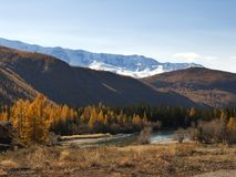Sunny autumn mountain valley with a river stream and shores with yellow dry grass. Stock Photography