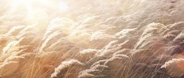 Sunny autumn Nature background; abstract October landscape Stock Photography