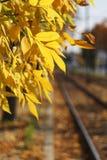 Sunny autumn near a railroad Stock Photography