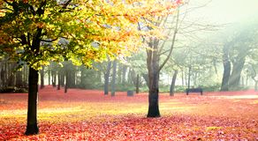 Sunny autumn park Stock Photography