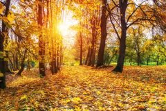 Sunny autumn in the park Royalty Free Stock Photo
