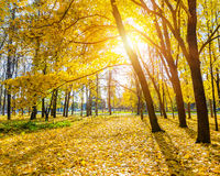 Sunny autumn park Royalty Free Stock Photo