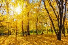 Sunny autumn park Stock Photography