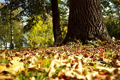 Sunny autumn in the park. Sunny autumn in a country park with foliage Stock Photo