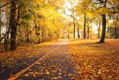 Sunny autumn park Royalty Free Stock Photography