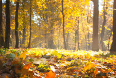 Sunny autumn park Royalty Free Stock Images