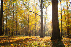 Sunny autumn park Stock Photos