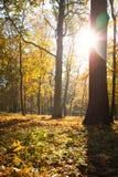 Sunny autumn park Royalty Free Stock Photo