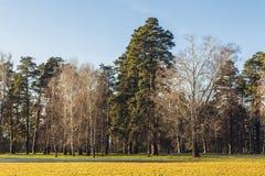 Sunny autumn park landscape. Sunny morning winter park landscape Stock Photos