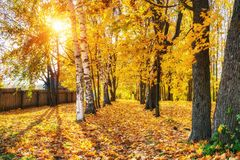 Sunny autumn in the park. Pathway in the sunny autumn park Royalty Free Stock Image