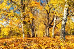 Sunny autumn in the park Stock Image