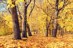 Sunny autumn in the park. Pathway in the sunny autumn park Stock Image