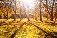 Sunny autumn park with yellow leaves on the ground Stock Photography
