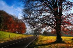 Sunny autumn road. To swiss alps Royalty Free Stock Photography