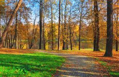 Autumn landscape with road in park. Sunny autumn scene with trees with yellow foliage stock photography