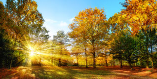 Sunny autumn scenery in an idyllic park Royalty Free Stock Photo
