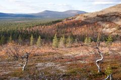 Sunny Autumn in Taiga Forest Stock Image