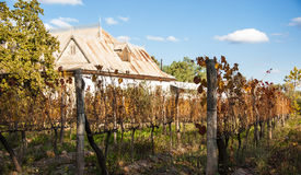 Sunny Autumn Vineyard Photo libre de droits