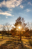 Sunny autumnal evening landscape with colorful trees Stock Image