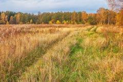 Sunny autumnal field Stock Image