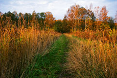 Sunny autumnal field Royalty Free Stock Images