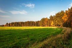 Sunny autumnal field Royalty Free Stock Photo
